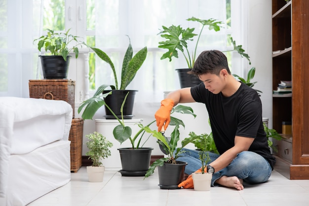 オレンジ色の手袋を着用し、屋内で木を植える男性。