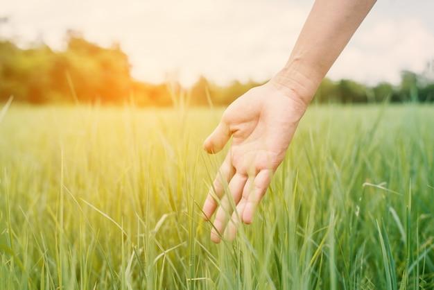 日没時に新鮮な草に触れる手