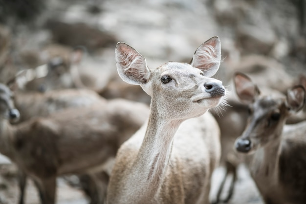 鹿の群れを閉じます。動物の概念。