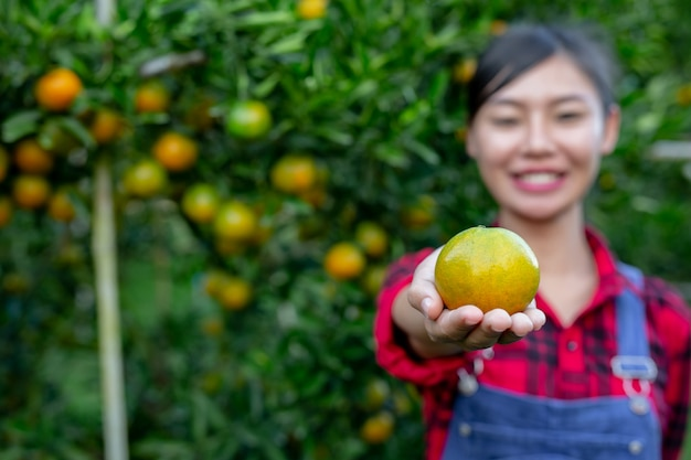 農家はオレンジを集めています