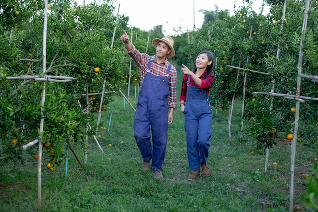 若い農家はオレンジを集めています