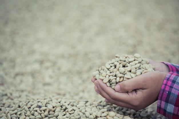 乾燥されているコーヒー豆の上のコーヒー豆と手