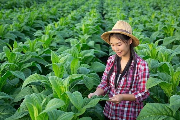 Агроном женщина смотрит табак в поле.