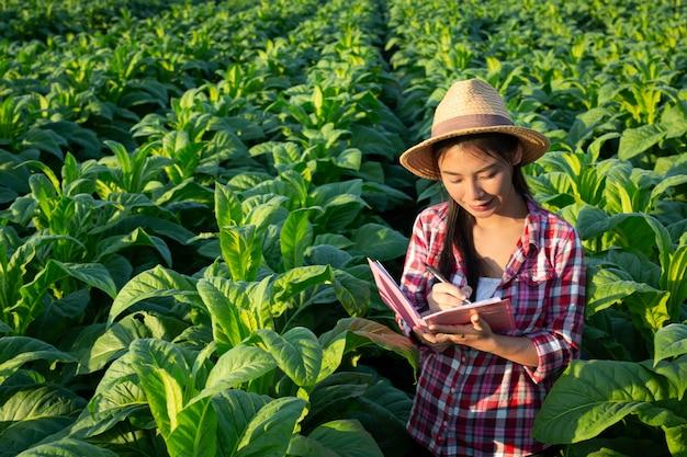 農家はノートブックチェック現代タバコ畑を開催します。