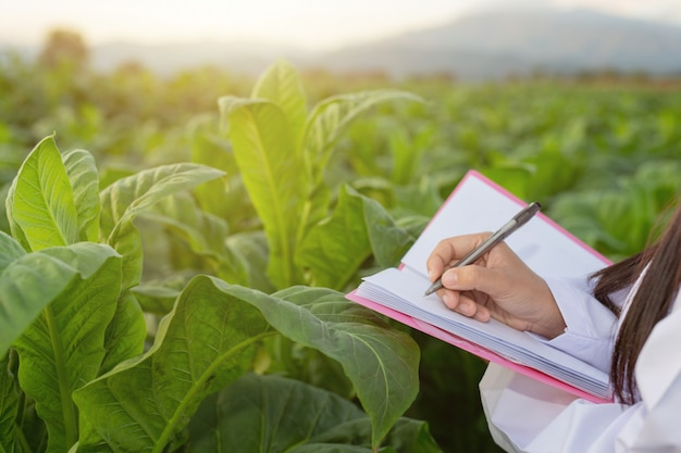 Женщины-исследователи исследовали табачные листья
