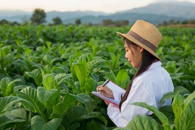 女性研究者がタバコの葉を調べた