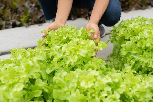 Пожилая пара собирает овощи в саду