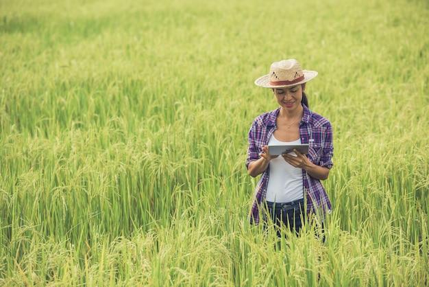 Фермер стоя в рисовом поле с таблеткой.
