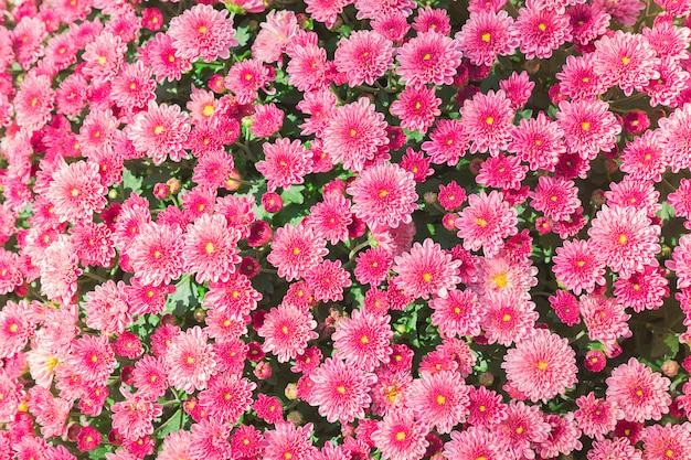 ピンクの花の庭の背景