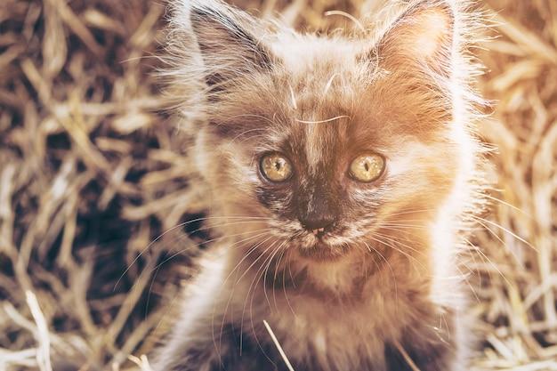 干し草の背景を持ついたずらな茶色の子猫