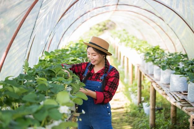 美しい農家の女性がいちご農場をチェック