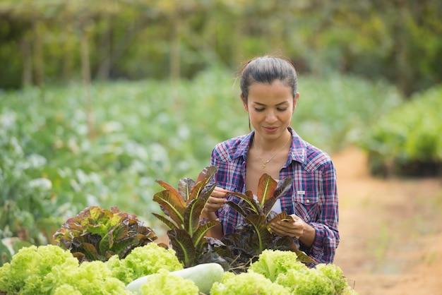農家はグリーンオークレタス農場で働いています。