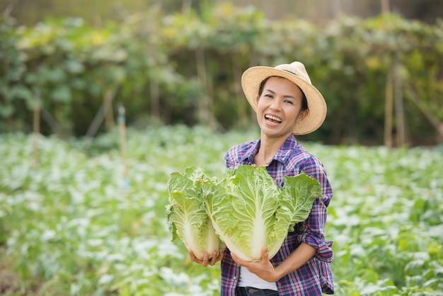 農家は白菜農園で働いています
