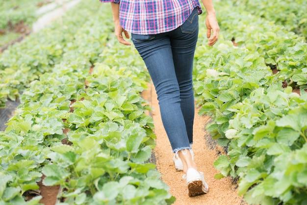 農民はイチゴ農場で働いています。