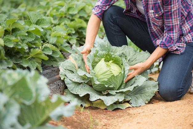Фермеры работают на капустной ферме