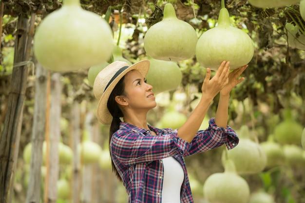 Большие шары калебаса на фермах, выращивающих холодные зимние овощи в таиланде
