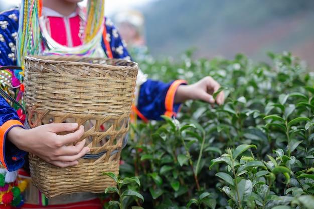 丘陵女性の農業