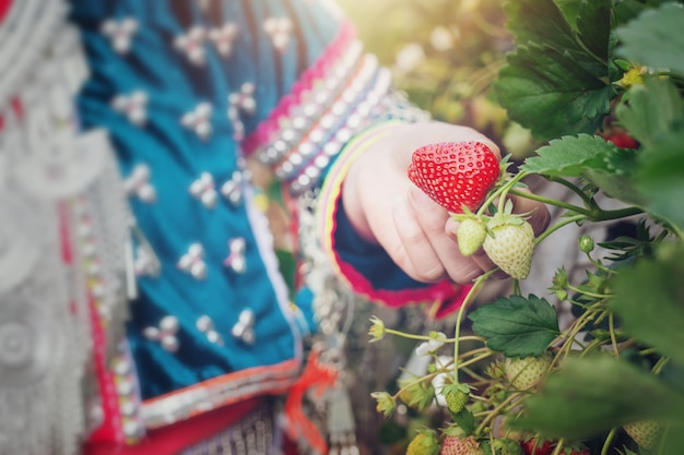 部族の女の子が農場でイチゴを集めています。