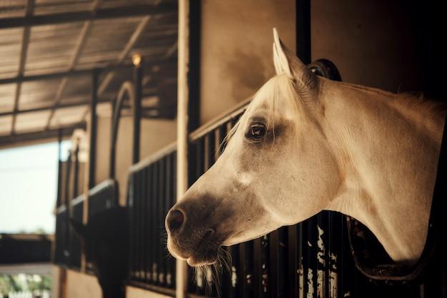 自然の中の馬