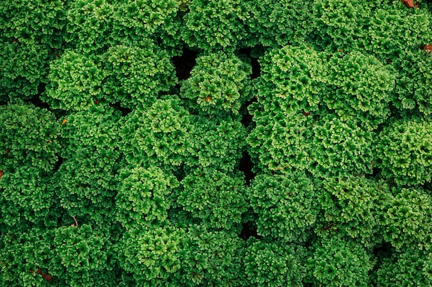 緑の葉の背景。