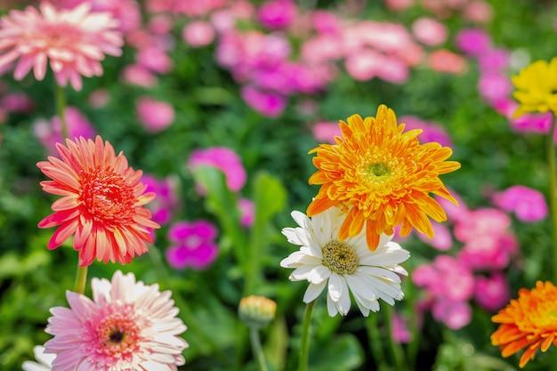 美しいカラフルな花の背景。