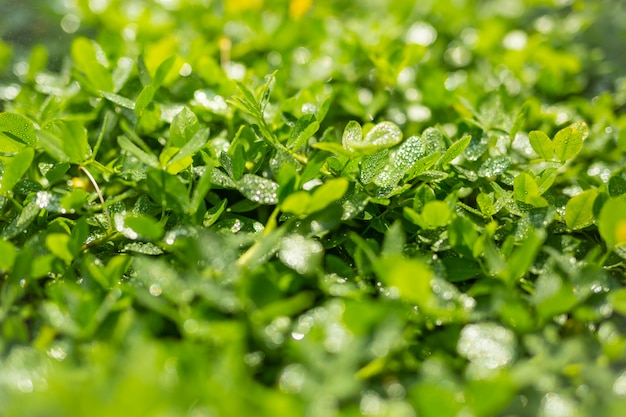 Зеленый лист фон.