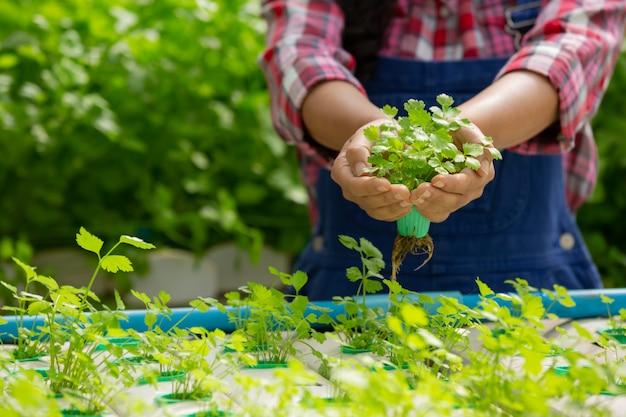Система гидропоники, посадка овощей и трав без использования почвы для здоровья