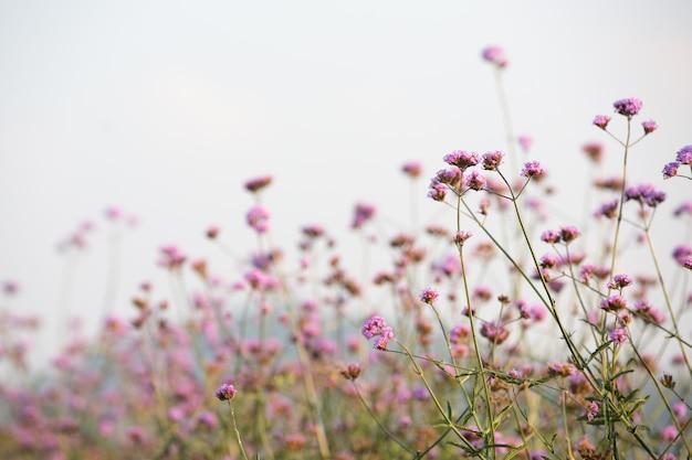 美しいピンクの花の背景。
