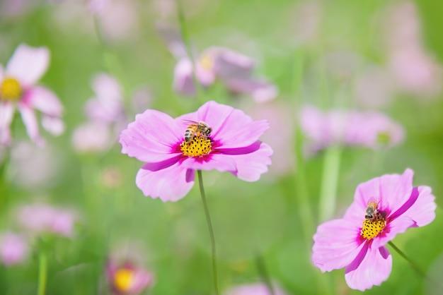 緑豊かな庭園の背景に美しい春紫コスモスの花
