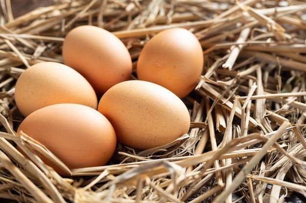 Свежее яйцо из курицы.