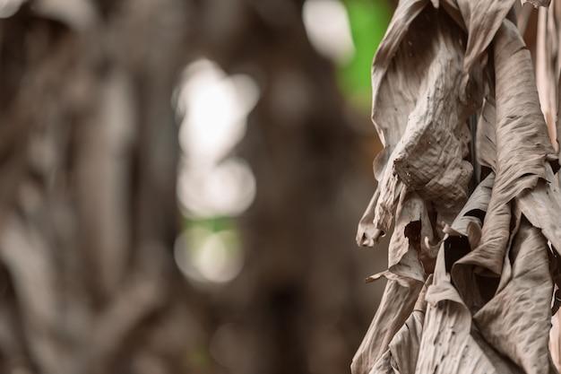 乾燥バナナの葉の背景。