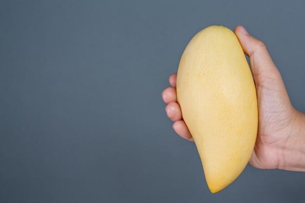 灰色の背景上のマンゴーのハンドル。