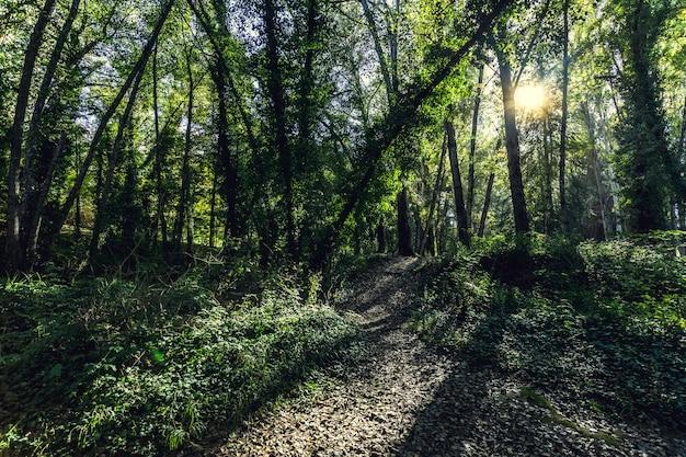 木の枝を通して輝く日光