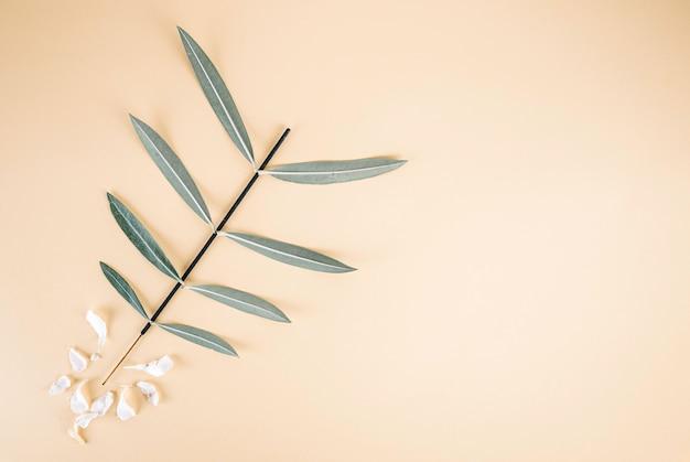 キョウチクトウの葉は白い花びらと明るい黄色の背景に