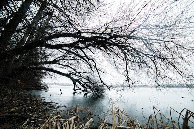 冷たい裸の荒野スペースなし