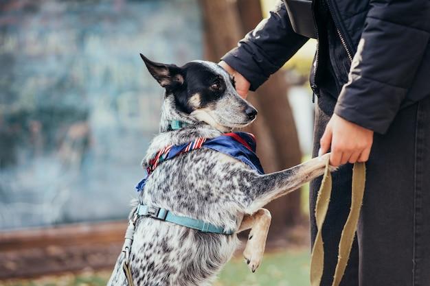 秋の公園で散歩に行く女性と犬。
