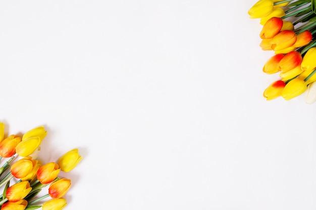 Тюльпаны на белом