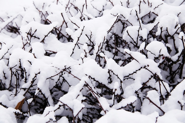 ブッシュの雪の要約。小さな茂みの枝を覆う雪のクローズアップ。