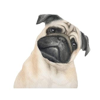 Акварельная иллюстрация породы мопсов