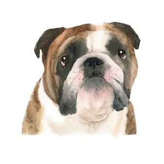 Английский бульдог собака акварельные иллюстрации