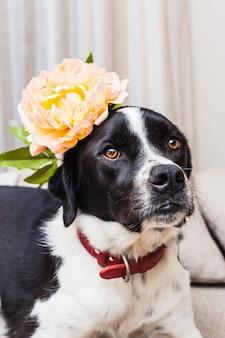 ニュートラルな色調のソファで花を身に着けている美しい黒と白の犬の肖像画