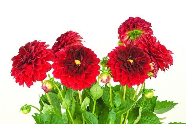 美しく新鮮な赤い花の花束