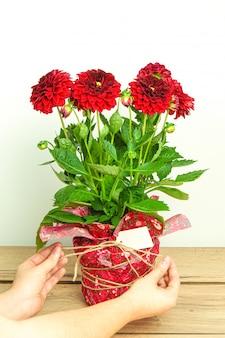Руки человека, связывающие бантом красивый упакованный букет из красных георгинов с пустой карточкой