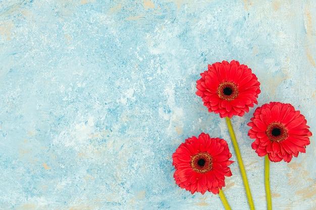 青いテクスチャ背景の上の新鮮な春の赤い花