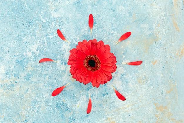 新鮮な春の赤い花と青いテクスチャ背景の上の花びら