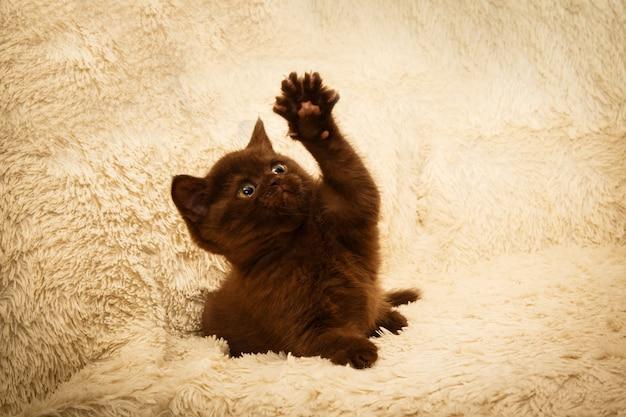 Шоколадный котенок в домашних условиях.