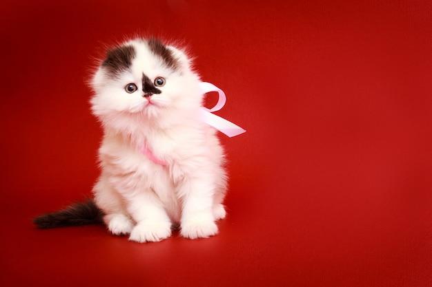 Пушистый котенок на красном фоне.