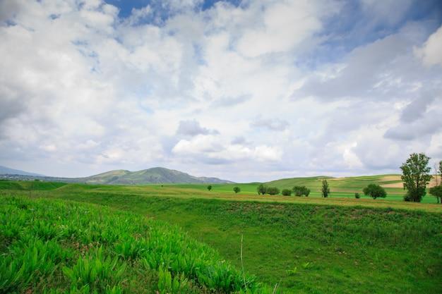 夏と春の風景。丸い丘の上の明るい緑の芝生。