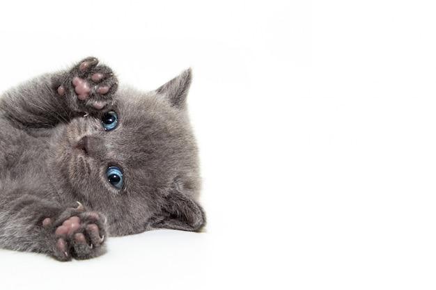 Маленький котенок с поднятыми лапами