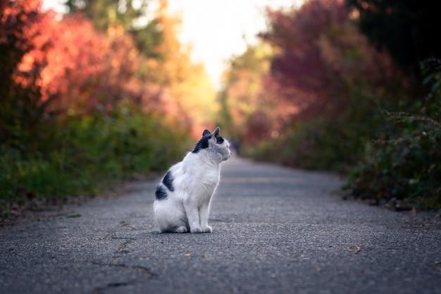 秋の公園でホームレスの猫。